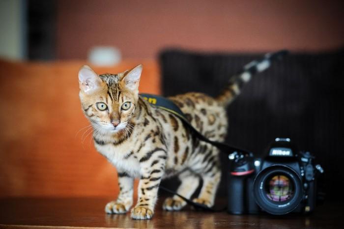 Fotografavimo paslaugos